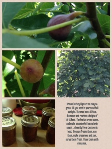 2013 Brown Turkey Figs - 08-28-2013