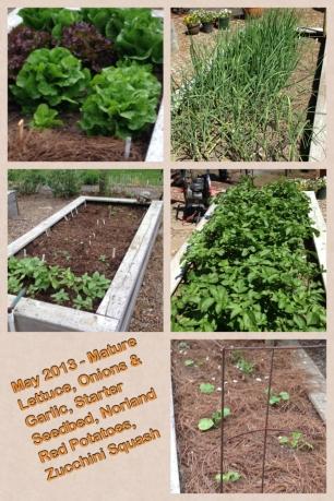 May 2013 Lettuce, Potatoes, Zucchini, Onions & Garlic, Seedbed