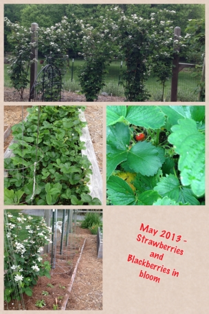 May 2013 Strawberries & Blackberries