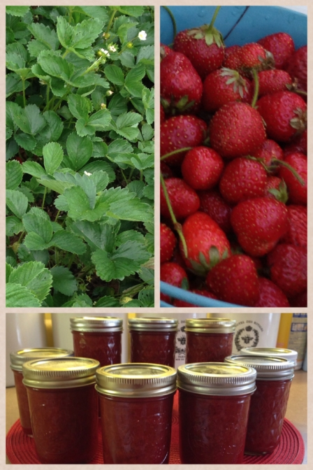 This is why we grow strawberries --- JAM!