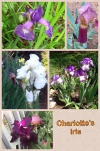 2013 Iris Collage