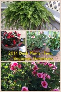 2014 Deck Plants