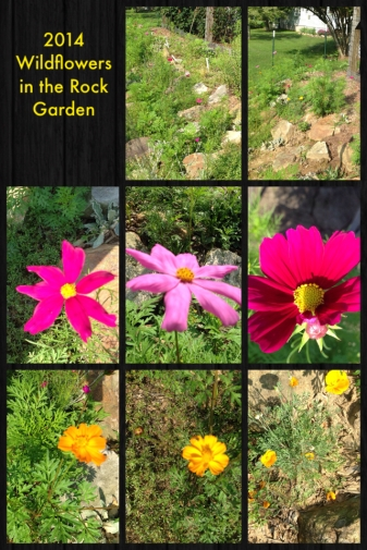 2014 Wildflowers in the Rock Garden