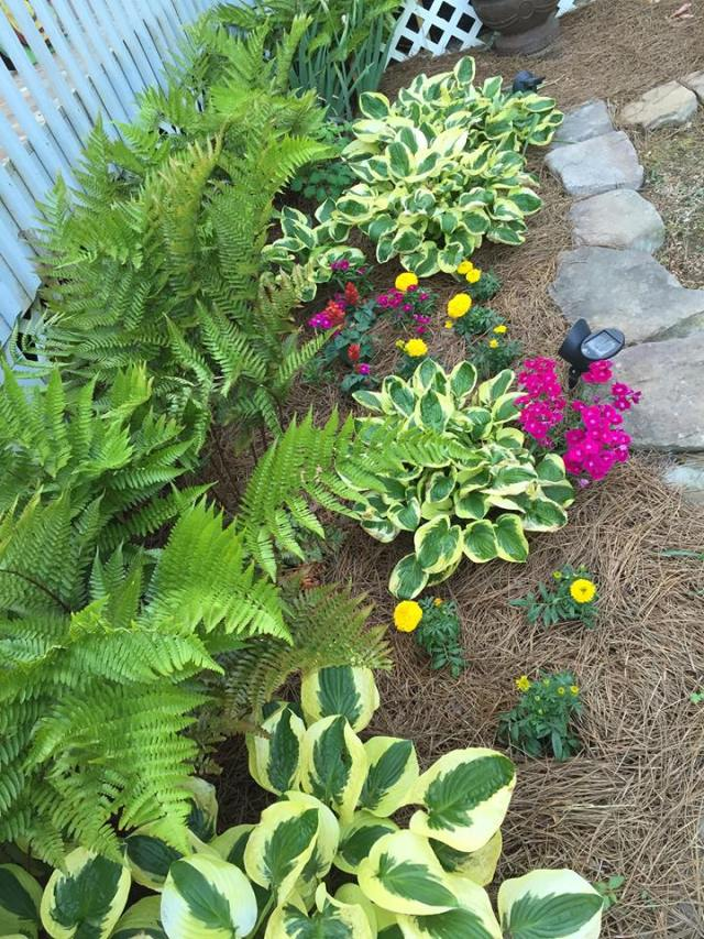 2015 Hostas and Ferns
