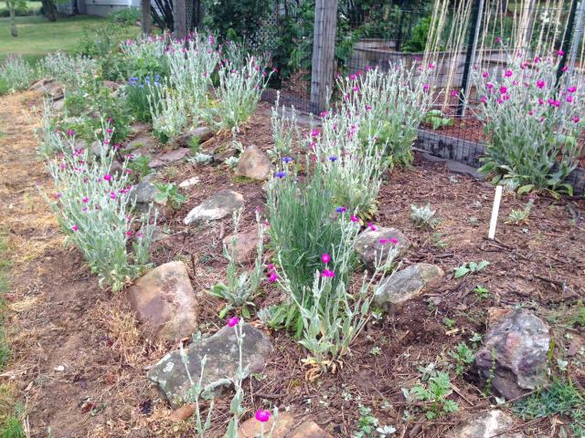2015 Wildflower Garden - Early View
