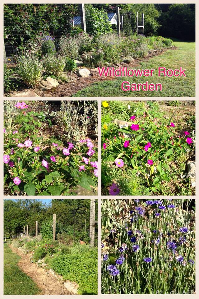Our Rock Garden is located at the rear of our Raised Beds. Several years ago we planted a variety of wildflower seeds. Now the flowers are reseeding themselves with a different look each month and each year.