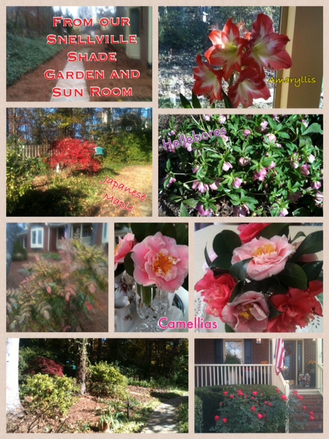 From our Snellville Shade Garden and Sun Room