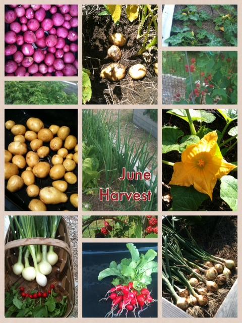 Jume Harvest