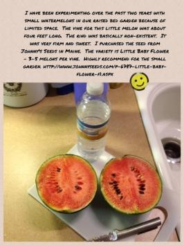 Little Baby Flower Watermelon