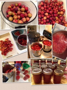 2013 Plum Jam - Santa Rosa Plums direct from our Orchard