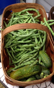 2013 Pole Beans Ready to be Broken