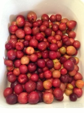 2013 Santa Rosa Plums in a Bowl