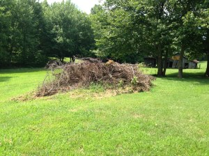 Our garden burn pile.  We accumulate it over the growing season and burn it as a bonfire in the fall on a dreary damp day