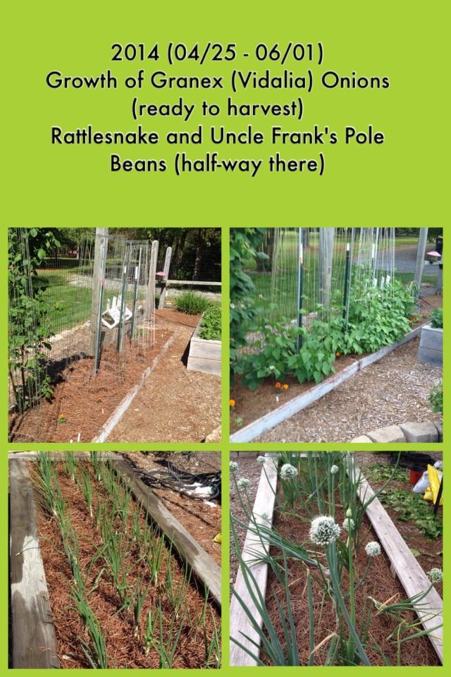 2014-06-02 Garden Growth 1