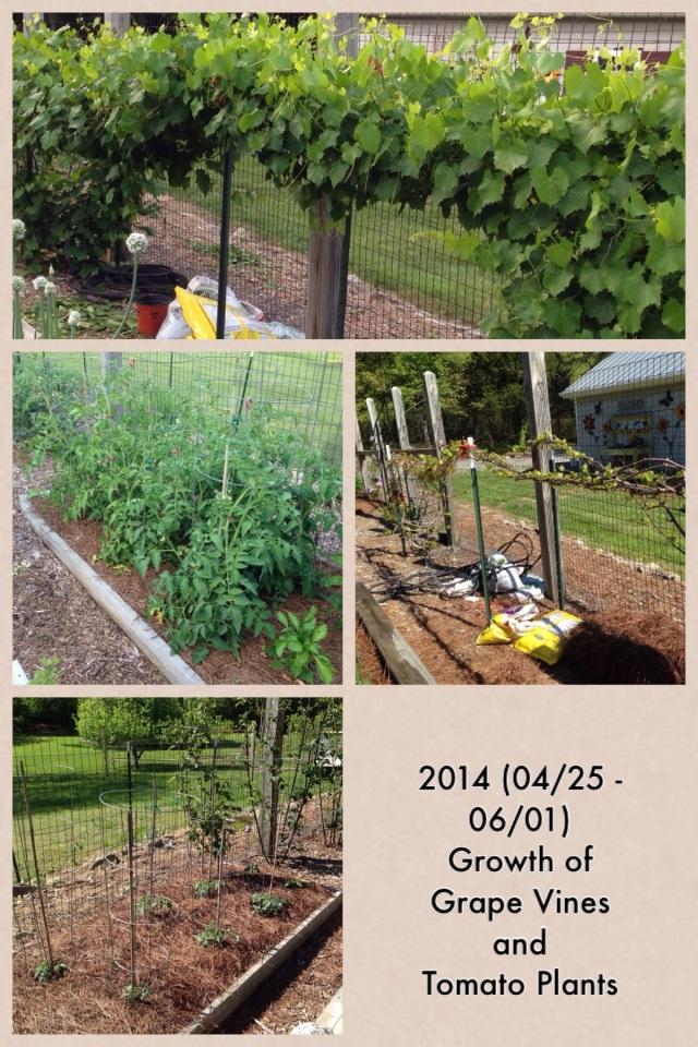2014-06-02 Garden Growth 3