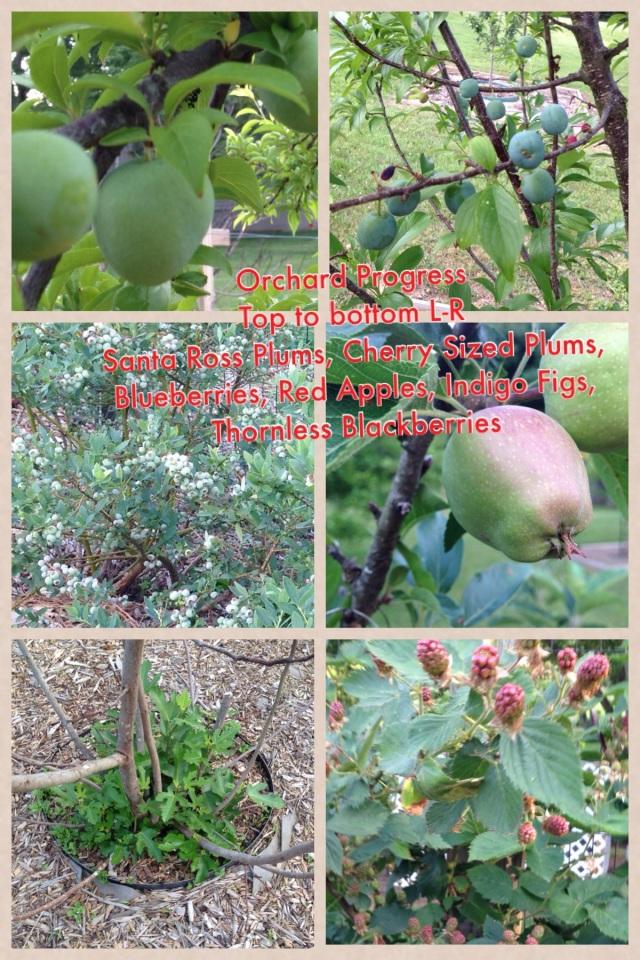 2014-06-02 Garden Growth 4
