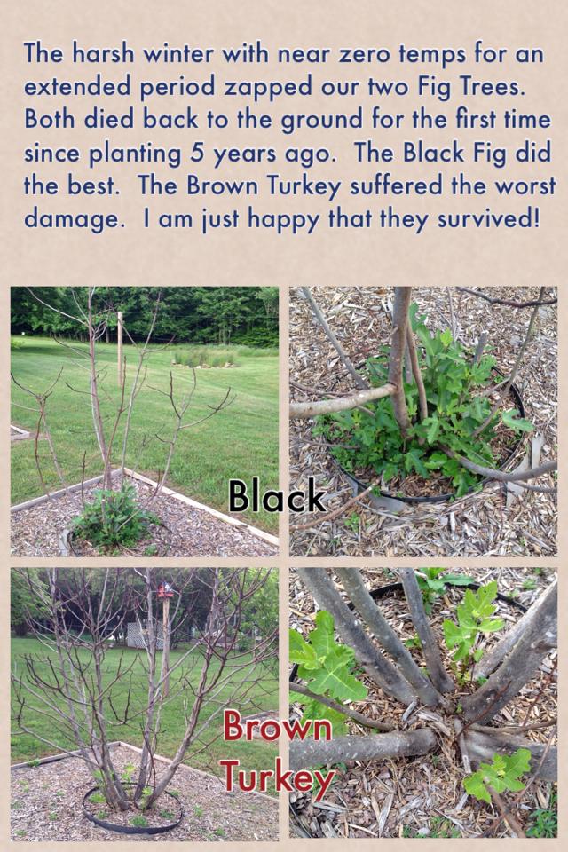 2014-06-02 Garden Growth 5