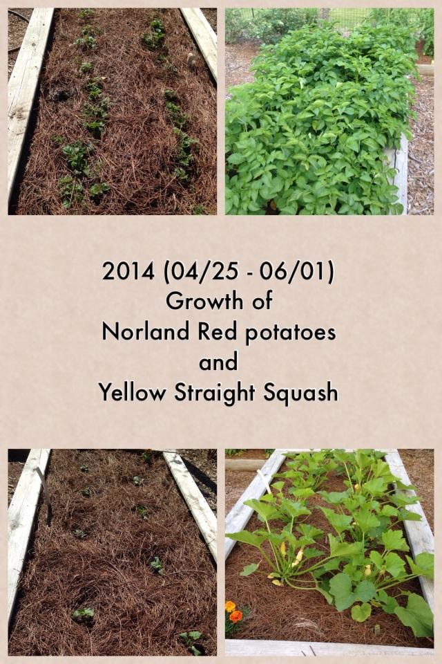 2014-06-02 Garden Growth 6