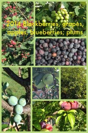 2014 Fruits of the Garden