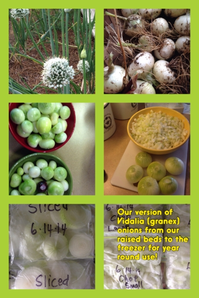 2014 Granex Onions from Box to Freezer Collage