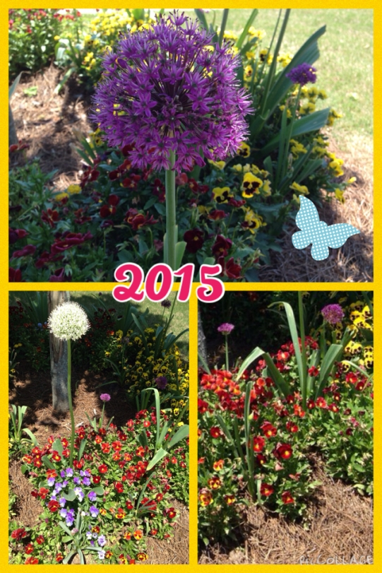2015 Hoschton Front Flower Bed